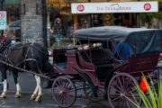 A Banff carriage ride is a perfect sightseeing tour