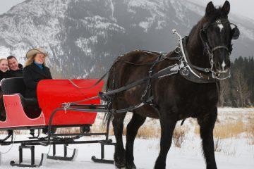 Banff Trail Riders Private Sleigh Ride