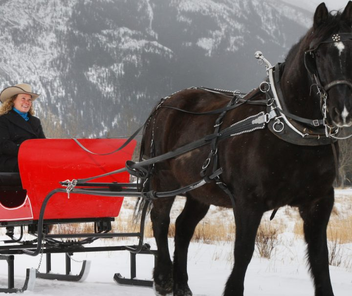 Banff Trail Riders Private Sleigh Ride