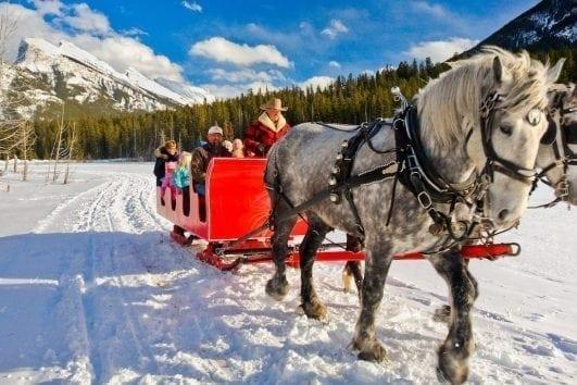 Banff Trail Riders Public Sleigh Ride