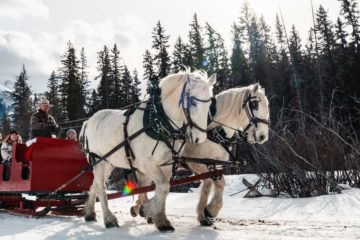 Banff sleigh rides in winter