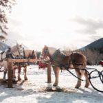 Banff winter sleigh rides