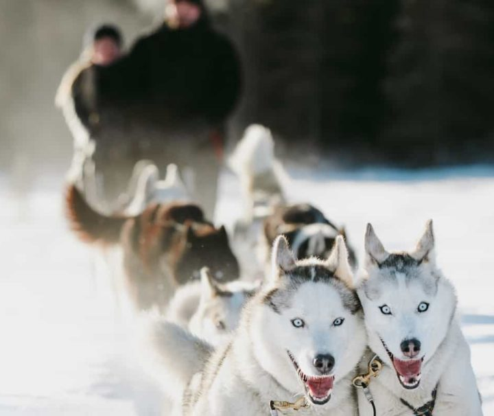 Canmore dogsledding tour from Banff with transport