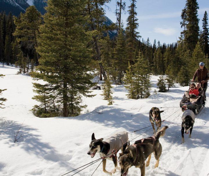 Dogsledding at Lake Louise, Banff National Park