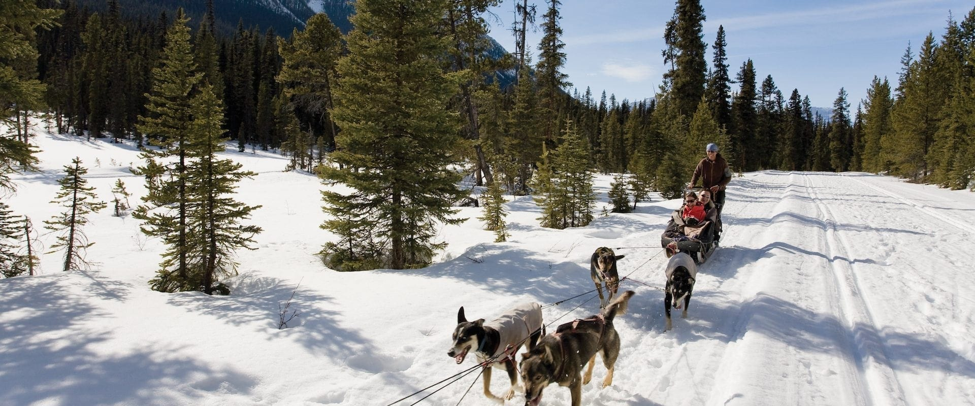 Dogsledding – Great Divide 1.5 Hrs