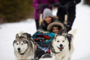 Drive your own dogsled near Canmore with transport from Banff