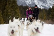 Family winter dogsledding tours near Canmore