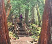 Giant Cedars Boardwalk Western Canada Explorer