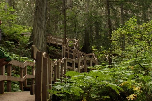Giant Cedars Boardwalk on the Western Canada Explorer