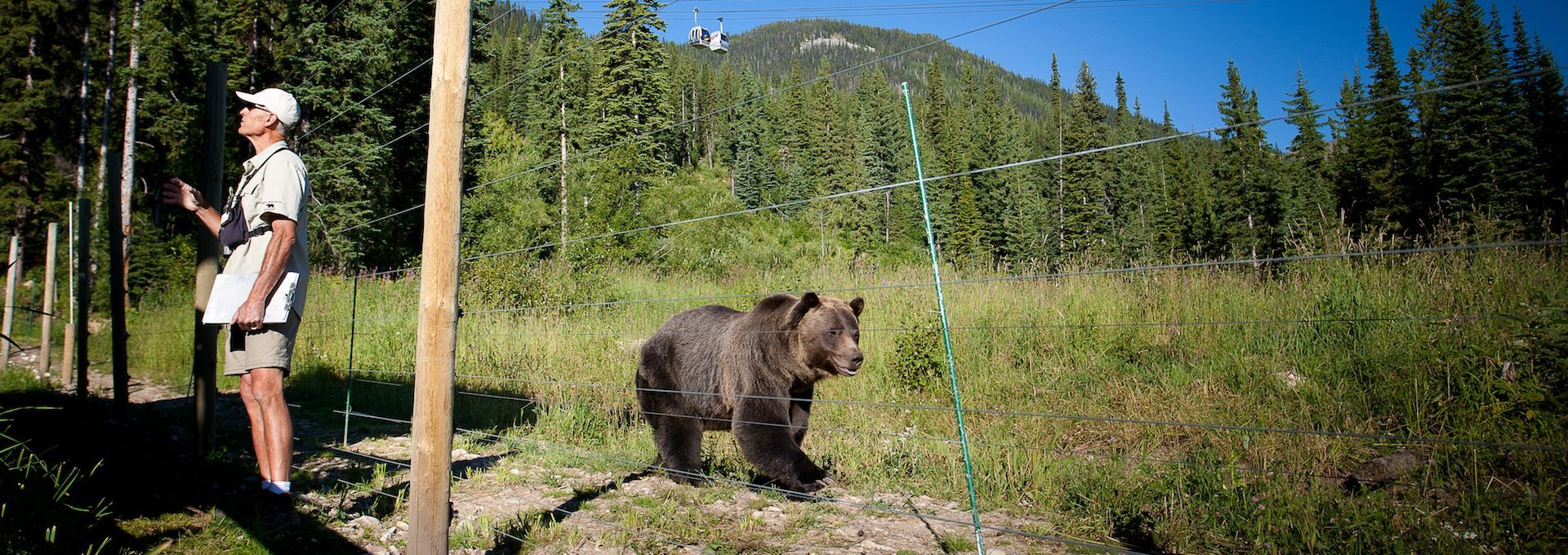 Grizzly Bear Refuge