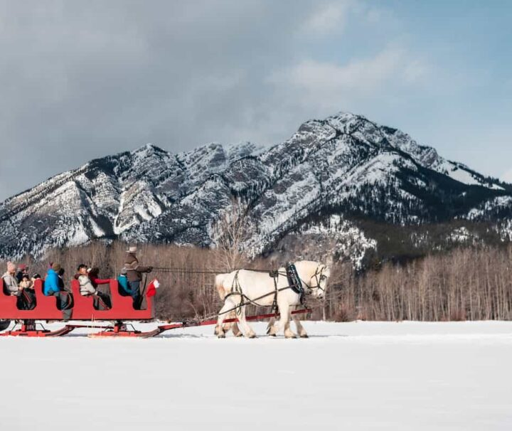 Group sleigh ride with family and friends in Banff
