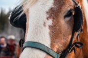 Horse drawn private sleigh ride