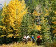 Horseback Ride Fall Banff Trail Riders