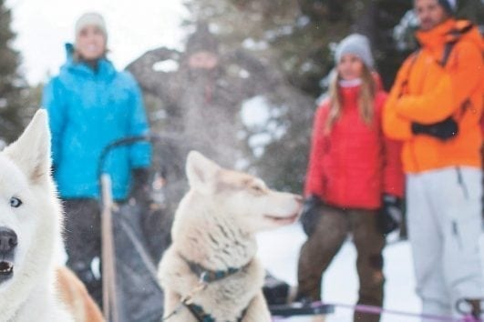 Great Divide Dogsled Tour in Lake Louise, Alberta