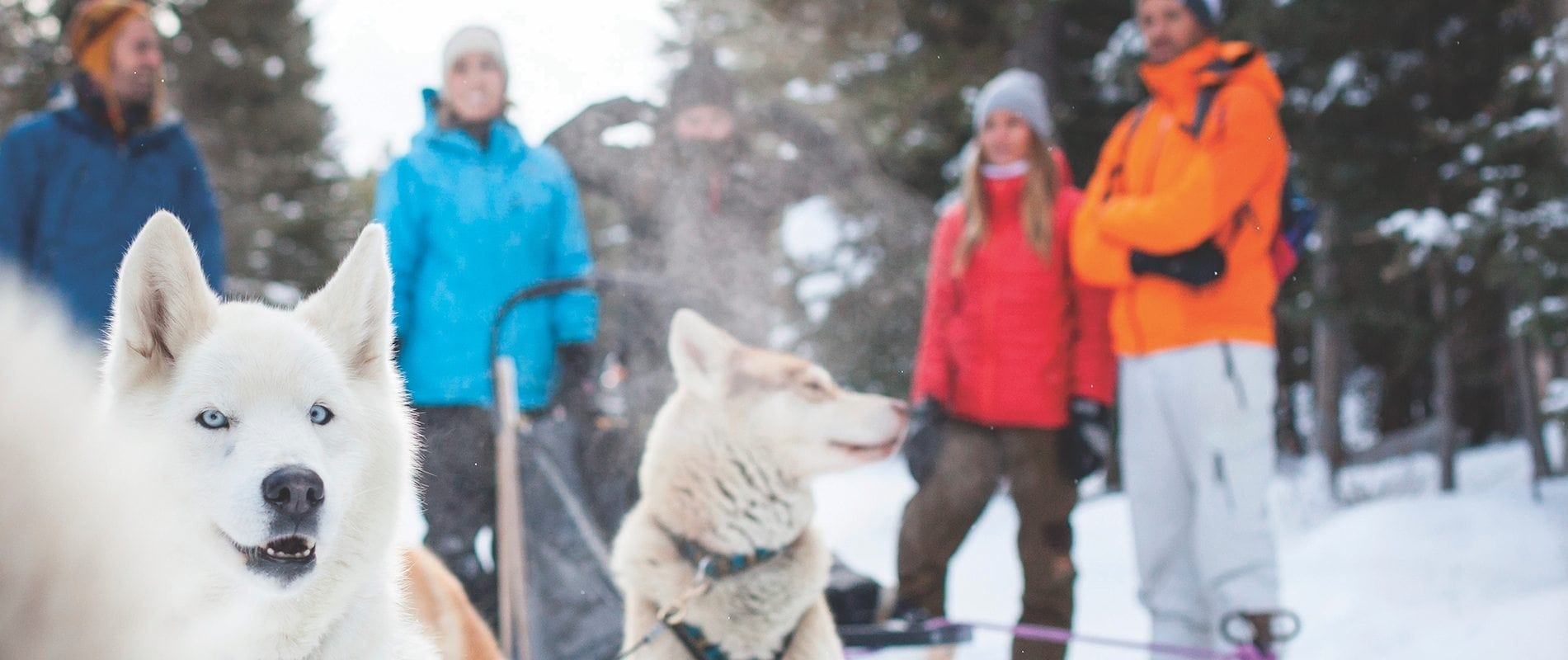 Lake Louise Tour + Dogsledding