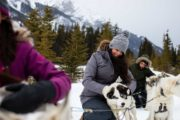 Play with the dogs on a Canmore dogsledding tour