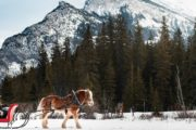 Private Banff sleigh ride for two in the Canadian Rockies