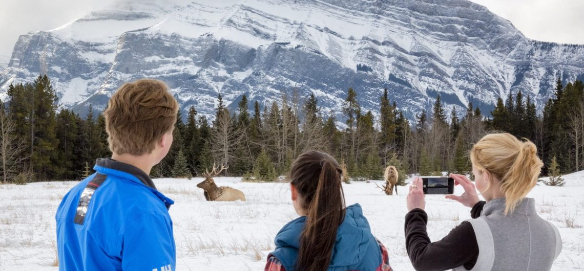 See Elk on the Discover Banff and Its Wildlife Winter Tour