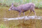 See animals such as deer on a wildlife tour with Discover Banff Tours