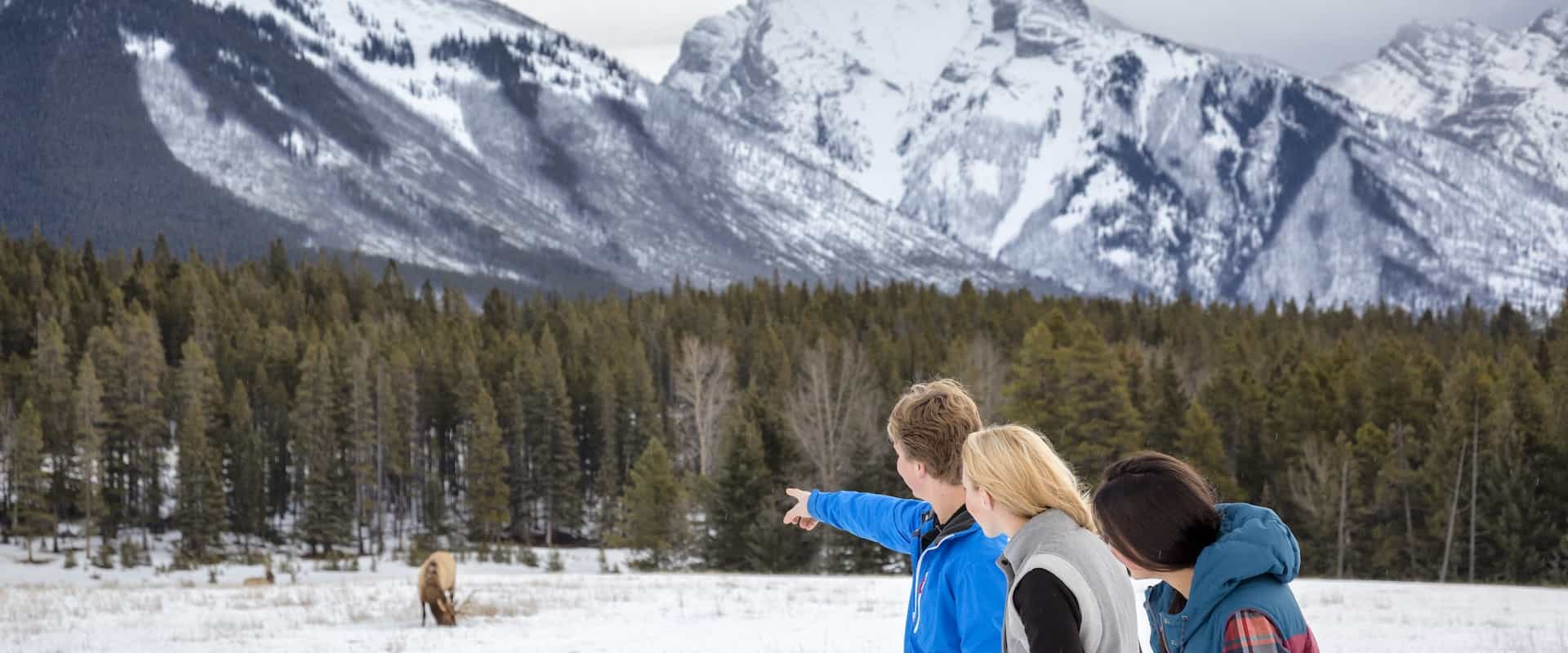 See wildlife on a Banff winter tour with Discover Banff Tours