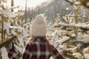 Snowshoe through snowy trees with Discover Banff Tours