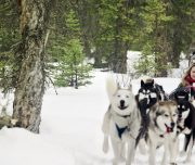 Snowy Owl Tours Dogsled Tour