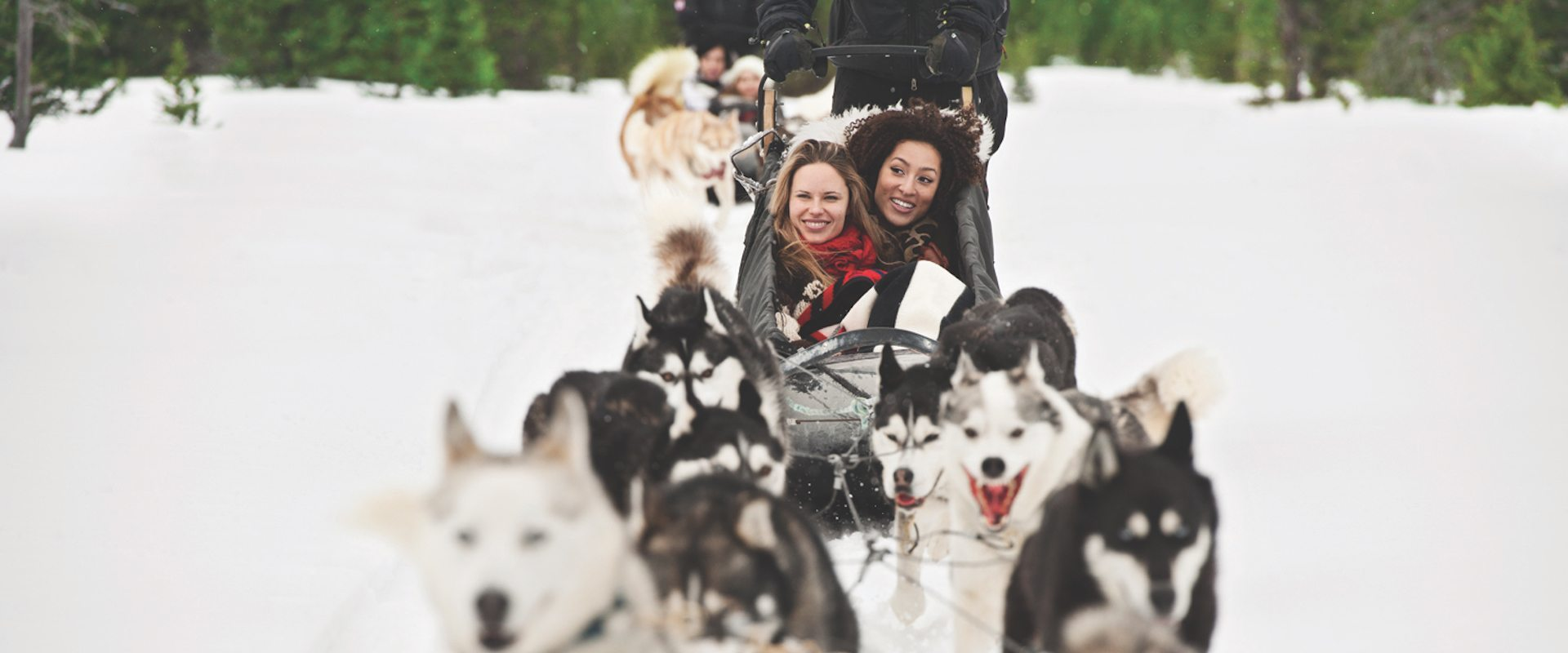 Dogsledding – Powder Hound 2 Hrs