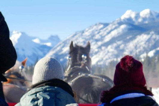 Take a Banff sleigh ride with Discover Banff Tours