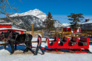 Take a group sleigh ride with family or friends at Warner Stables in Banff