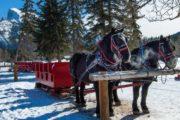 Take a magical banff winter sleigh ride