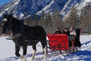 Take a private Banff sleigh ride with Discover Banff Tours in the Canadian Rockies