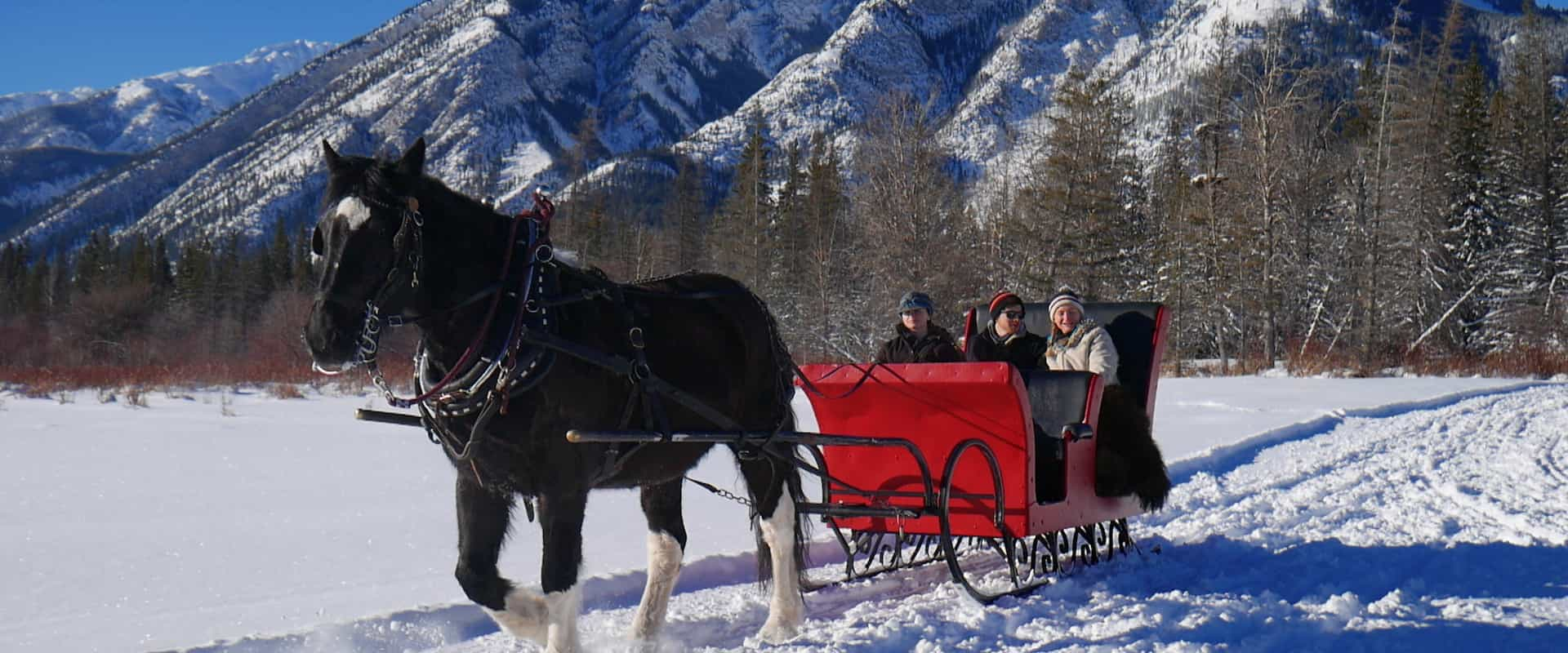banff private sleigh ride discover banff tours