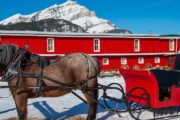 Take a private winter sleigh ride in a one horse open sleigh