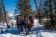 Take a winter sleigh ride in Banff through the mountain meadows