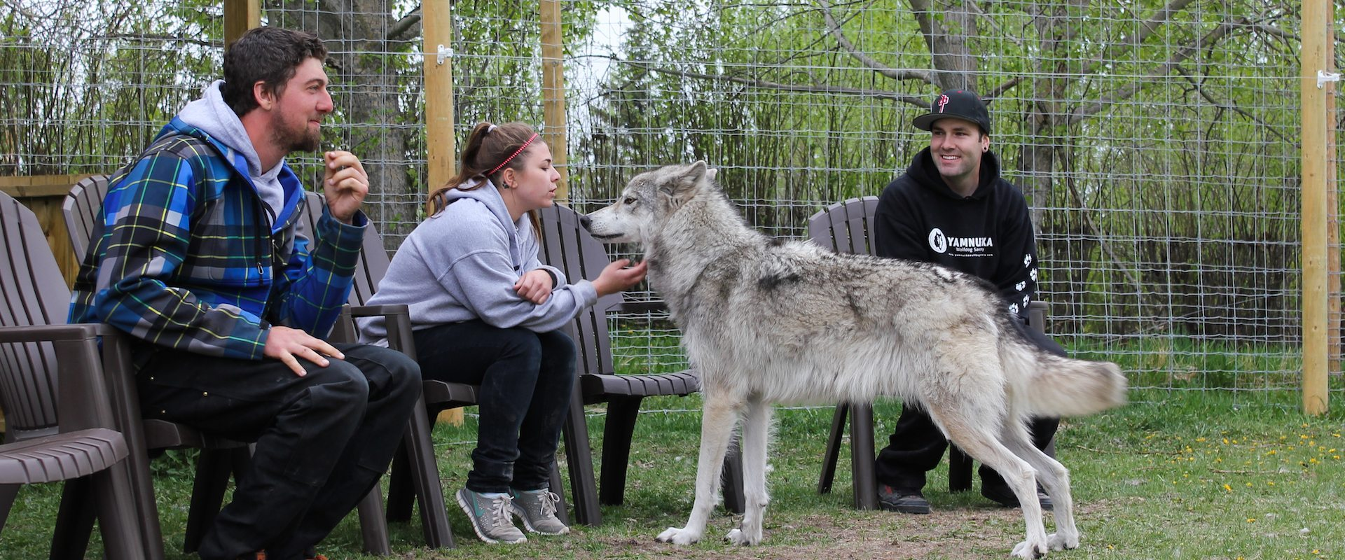 Wolfdog Sanctuary – Interactive