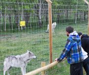 Yamnuska Wolfdog Sanctuary Sanctuary Walk