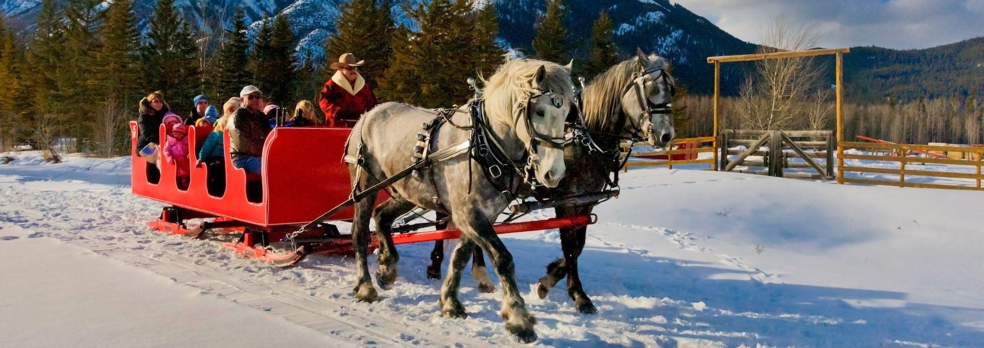 banff sleigh rides discover banff tours