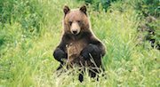 Banff Wildlife Tours