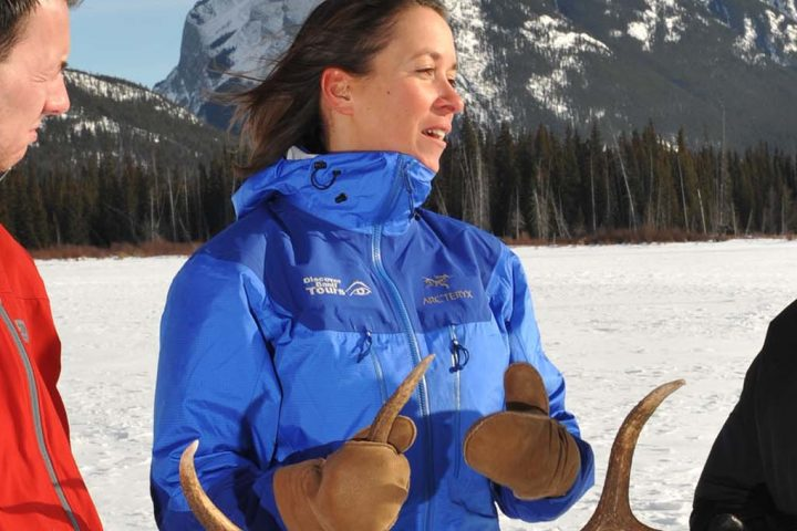 Discover Banff & It's Wildlife Tour