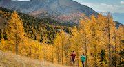 Fall colors in Lake Louise
