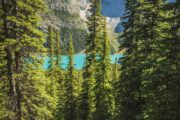 Guided Banff Hike to Larch Valley with Discover Banff Tours
