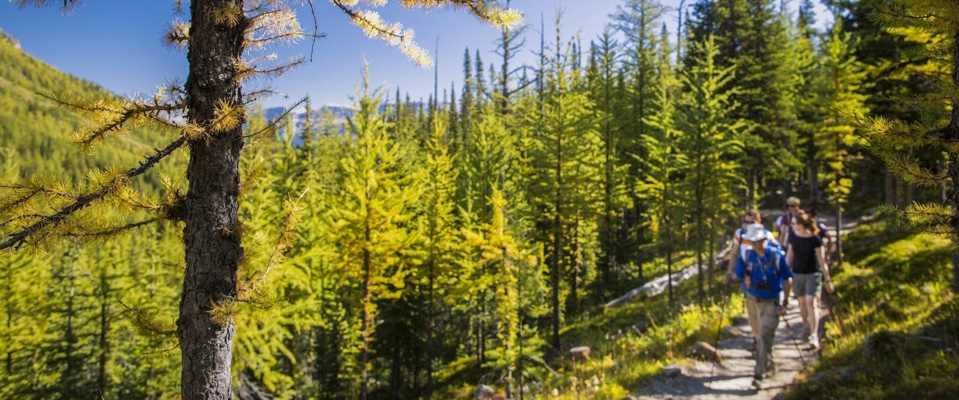 See Larch Valley with a Professional Hiking Guide with Discover Banff Tours