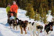 Banff Dogsledding