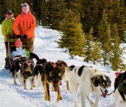 Banff Dogsled