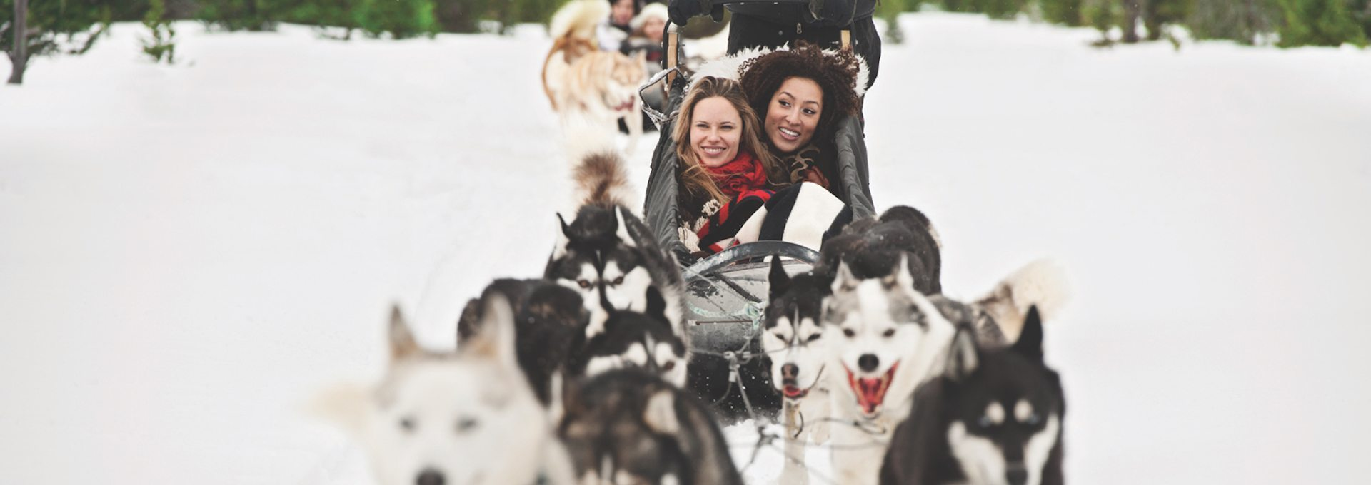 Dogsledding – Powder Hound