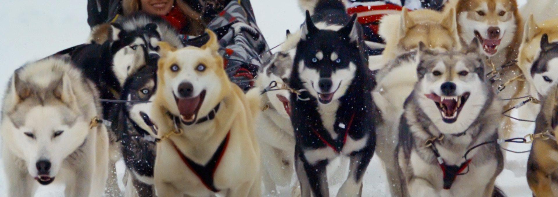 Dogsledding – Sunfeather Winterlude