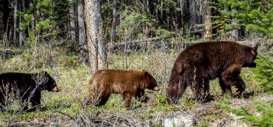 Jasper Wildlife Watching Tours