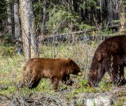 Jasper Wildlife Watching Tours