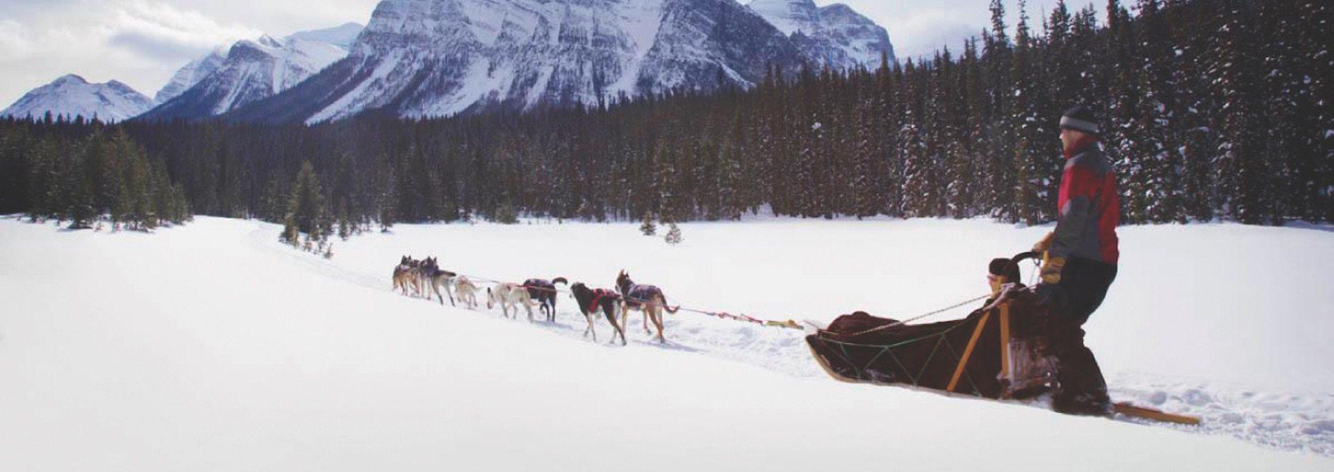 dogsledding great divide discover banff tours