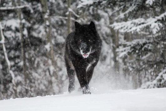 Wolfdog Sanctuary